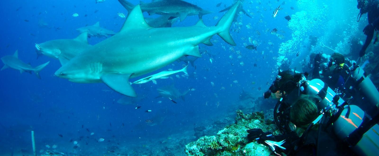 Shark Conservation Volunteering in Fiji | Projects Abroad